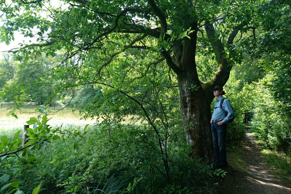 Вдоль тропинки от поместья Фуссингё и в лесу растут красные дубы
