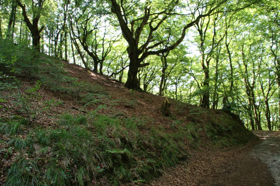 Буковый лес троллей (дат. troldskov)