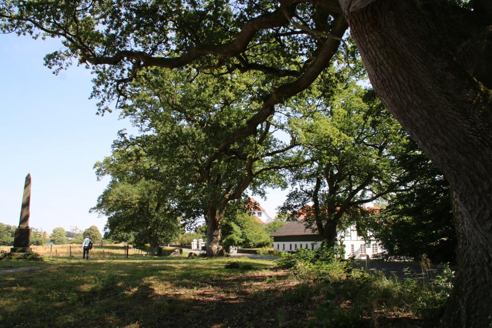Аллея из многовековых дубов черешчатых (лат. Quercus robur, дат. Stilk-eg)