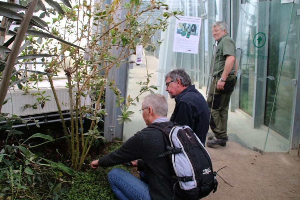 Сотрудник ботанического сада Ян Расмуссен (Jan Ransmussen)