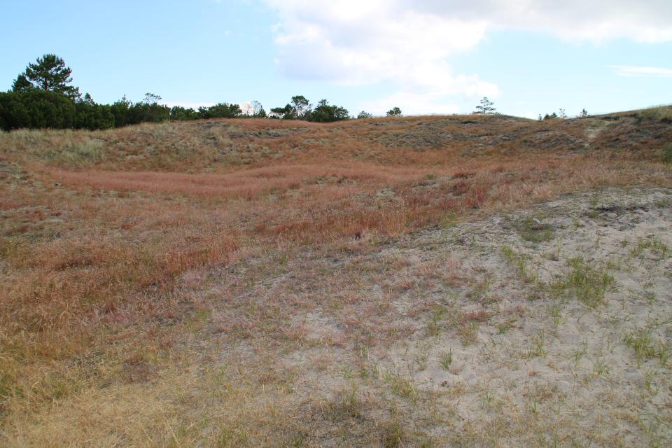 Красноватые холмы из песка, поросшие булавоносцем седоватым
