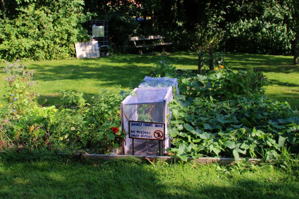 Городские огороды Greenshare с кустовой фасолью и с мини теплицей.