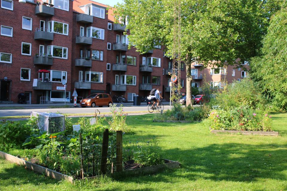 Городские огороды Greenshare с видом на улицу Langelandsgade и жилые корпуса