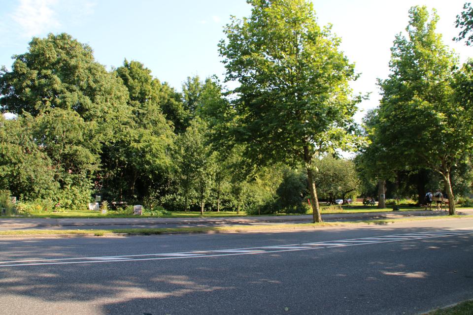 Вид на парк с городскими огородами с улицы Langelandsgade, г. Орхус. Дания