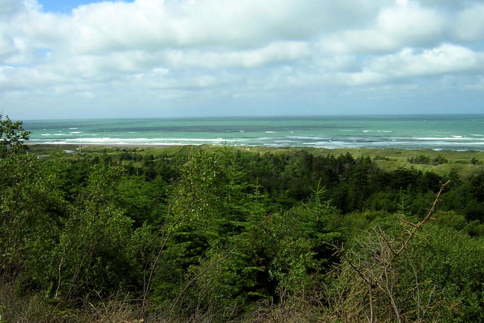 Лес с ситхинскими елями возле берега Северного моря