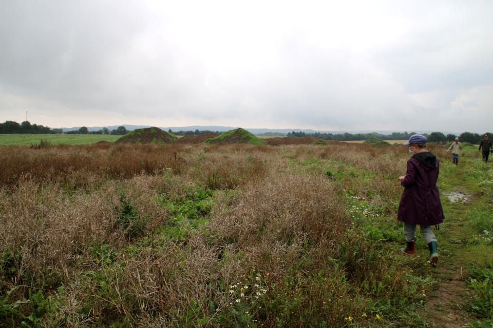 Рапсовое поле возле места поселений времен железного века в Граубалле
