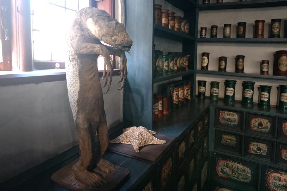 """""""Морская обезьяна"""" и морская звезда в старой аптеке"""