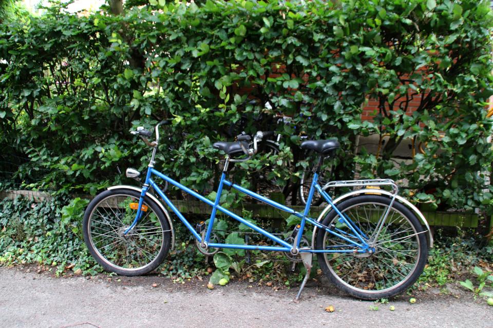Тандем - велосипед для двоих около буковой ограды