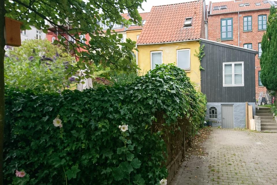 Зеленая ограда из плюща (лат. Hedera, дат. Vedbend)