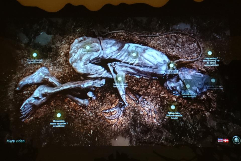 Фотография с экрана интерактивной панель про человека из Толлунда