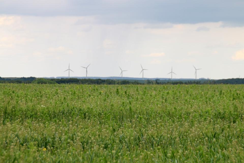 Ветряные мельницы посреди полей