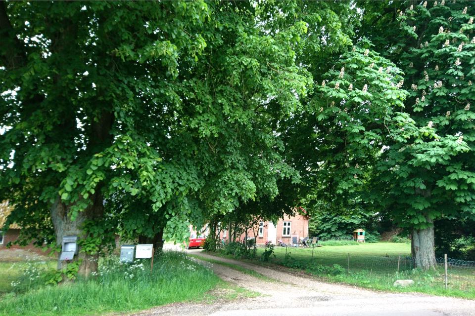 Почтовые ящики на липах возле старого поместья, Дания