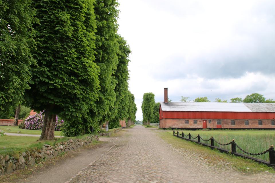 Дорога, вымощенная брусчаткой. Фото 7 июн. 2020, Граубалле, Дания