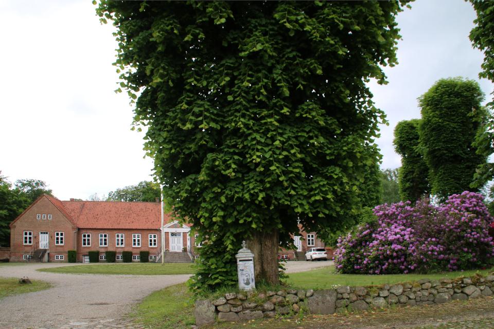 Рододендроны и стриженные липовые деревья во дворе усадьбы Граубалле
