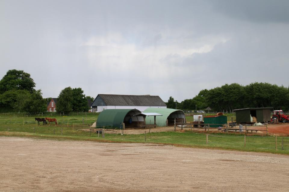 Лошадиная ферма на окраине города Граубалле. Фото 31 авг. 2017, Дания