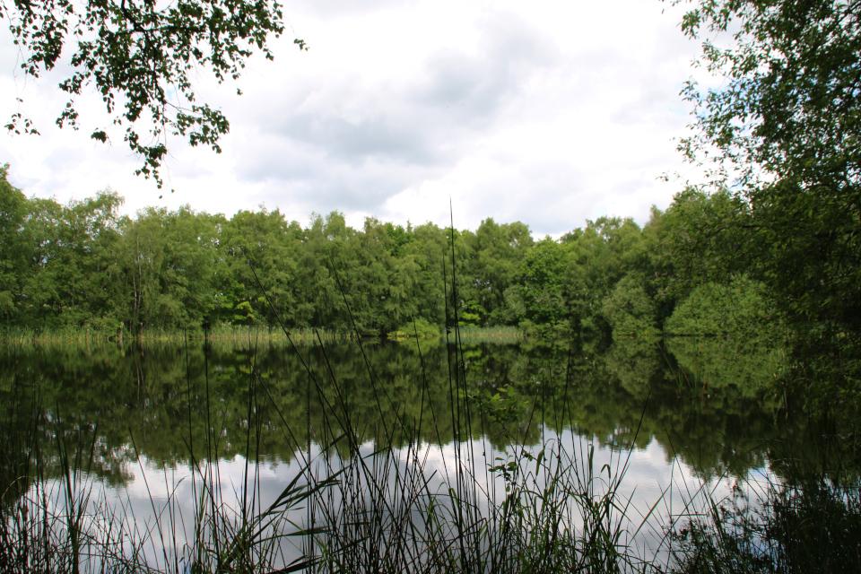 Заболоченное озеро Граубалле. Фото 7 июн. 2020, г. Силькеборг/ Silkeborg, Дания