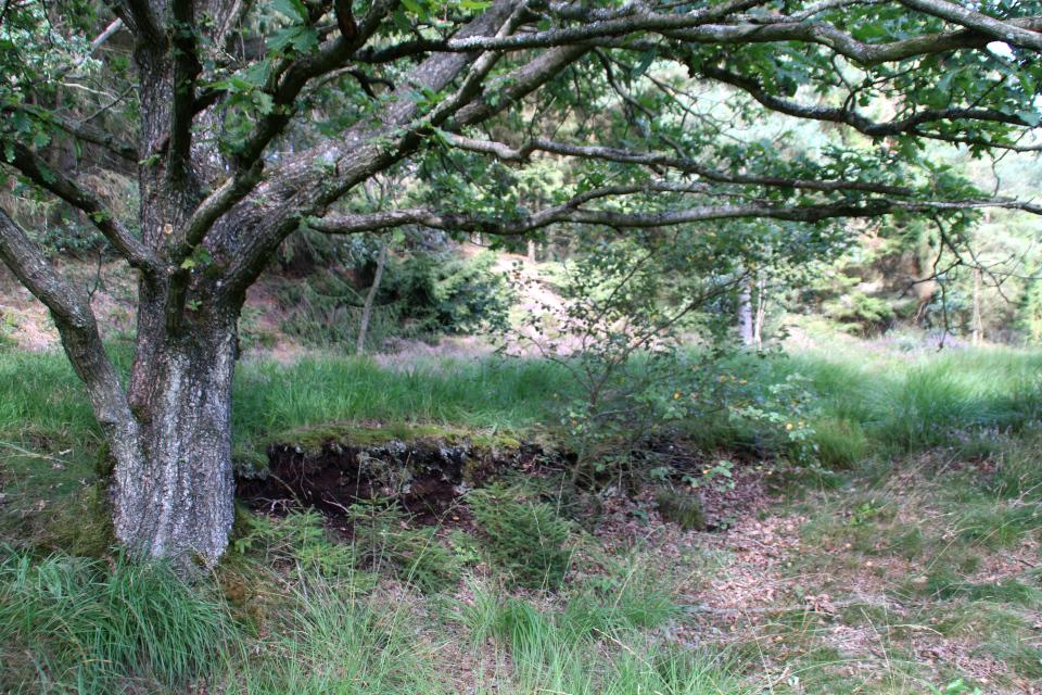 Торфяные пласты возле заболоченного места находки человека из Толлунда