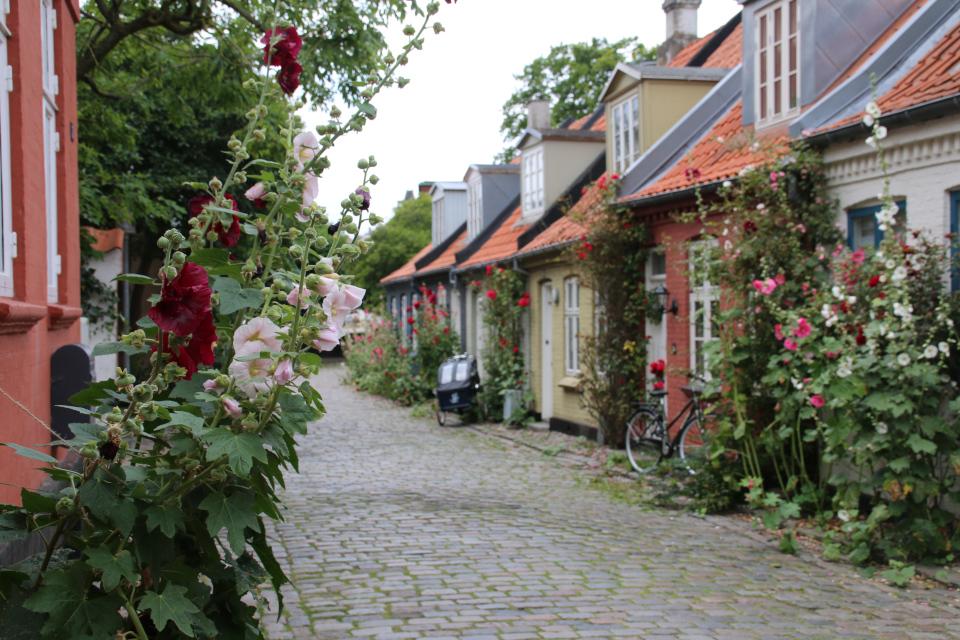 Цветущие мальвы возле домов на улице Мёллестиен (Møllestien)