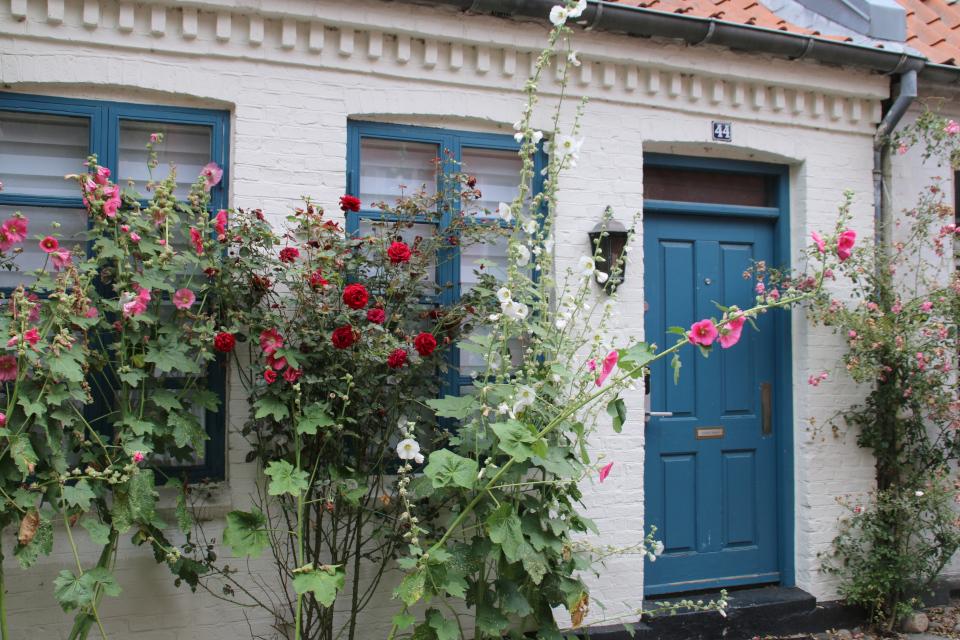 Розы и мальвы возле старых домов