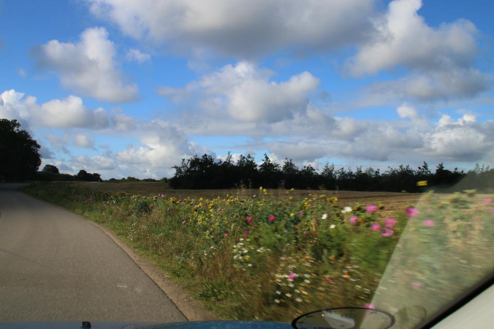 Цветы краям полей. Фото 7 сент. 2020, Фредериксдал / Frederiksdal, Дания