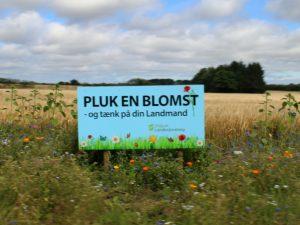 Цветы по краям полей