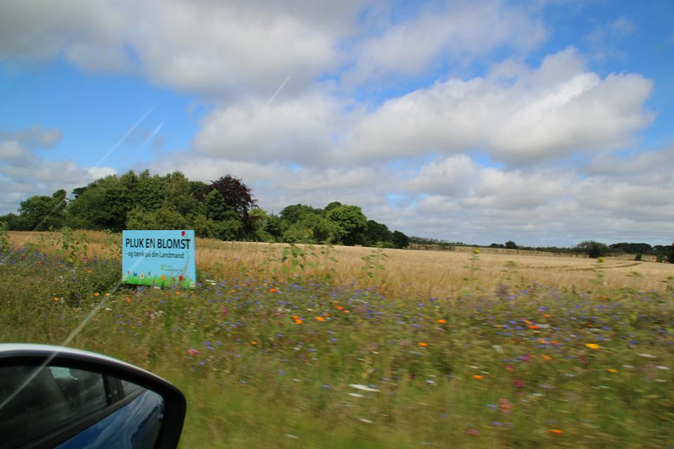 Рекламный щит предлагает собрать букет цветы краям полей