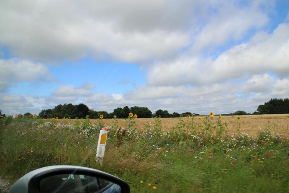 Цветы краям полей - цветочная смесь. Фото 2 авг. 2020, г. Силькеборг, Дания