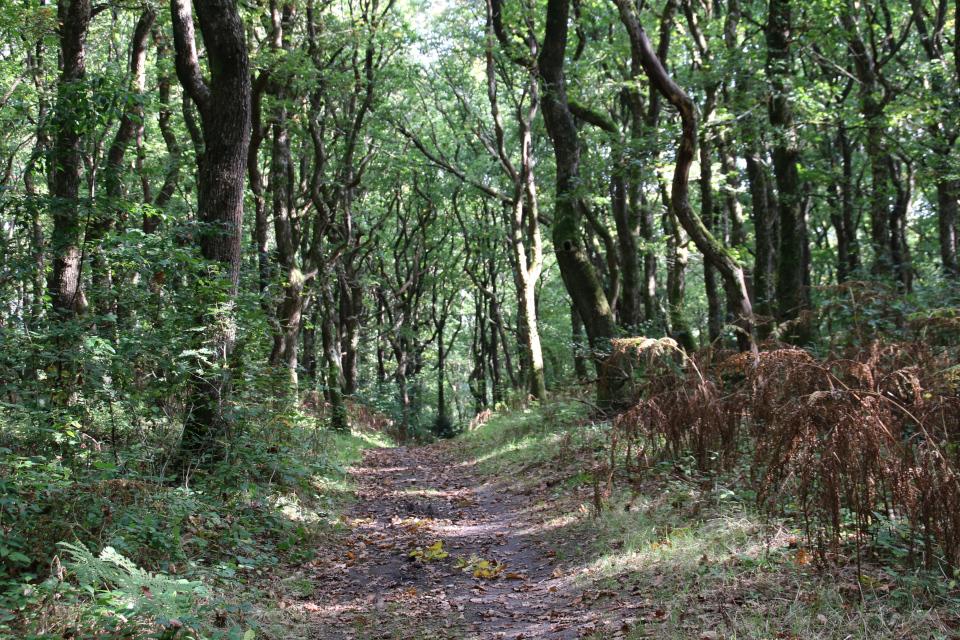 Доисторическая тропа Hærvejen, проходящая мимо кургана