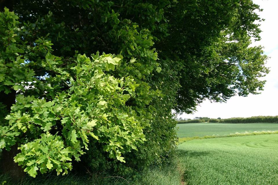 Тропинка через поля, лесополосы и небольшие лесочки