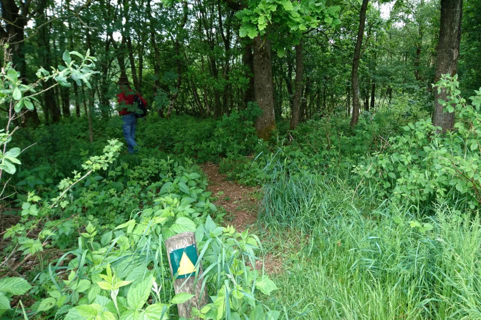 Заросли ежевики на лесной опушке, Дания