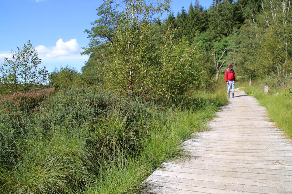 Место находки женщины из Эллига, заболоченная часть озера Бёлллингсё