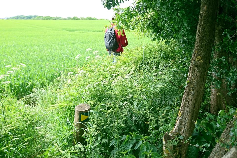 Дорожка между полем и лесополосой из боярышника