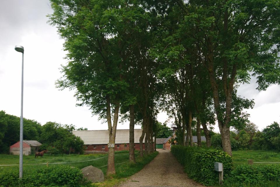 Старое поместье с аллеей из ясеня (лат. Fraxinus excelsior, дат. ask)