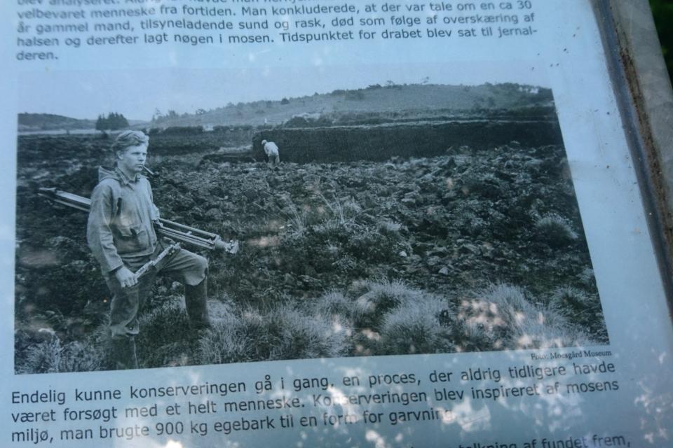 Питер Вильгельм Глоб (Peter Vilhelm Glob) на раскопках в торфяном болоте в 1950 г