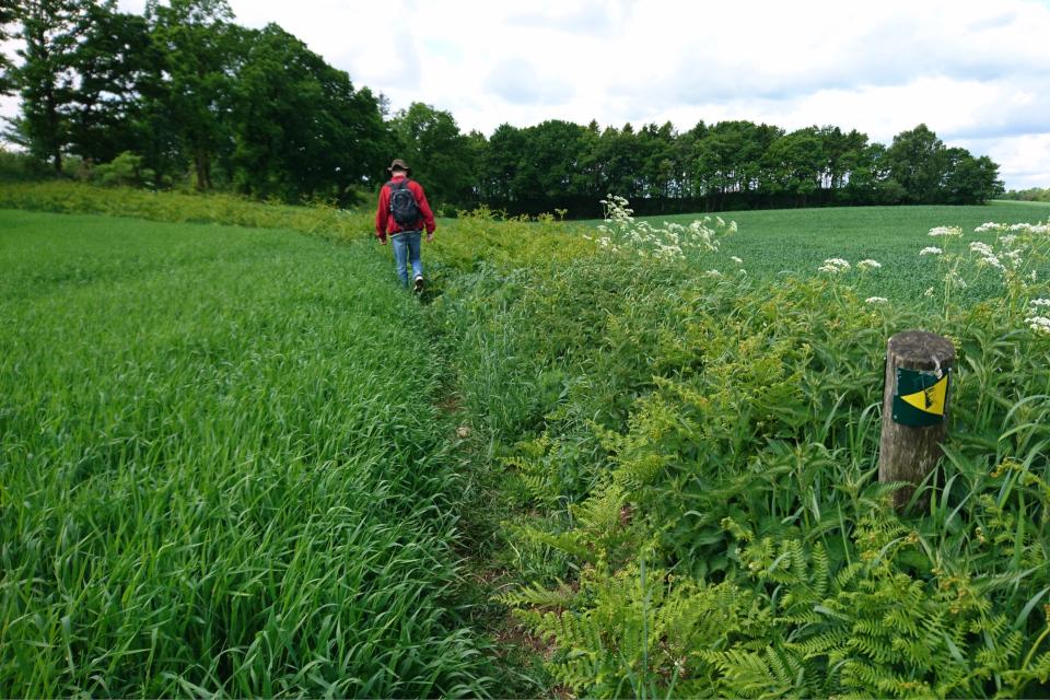 Длинная полоса папоротников вдоль полевой тропинке