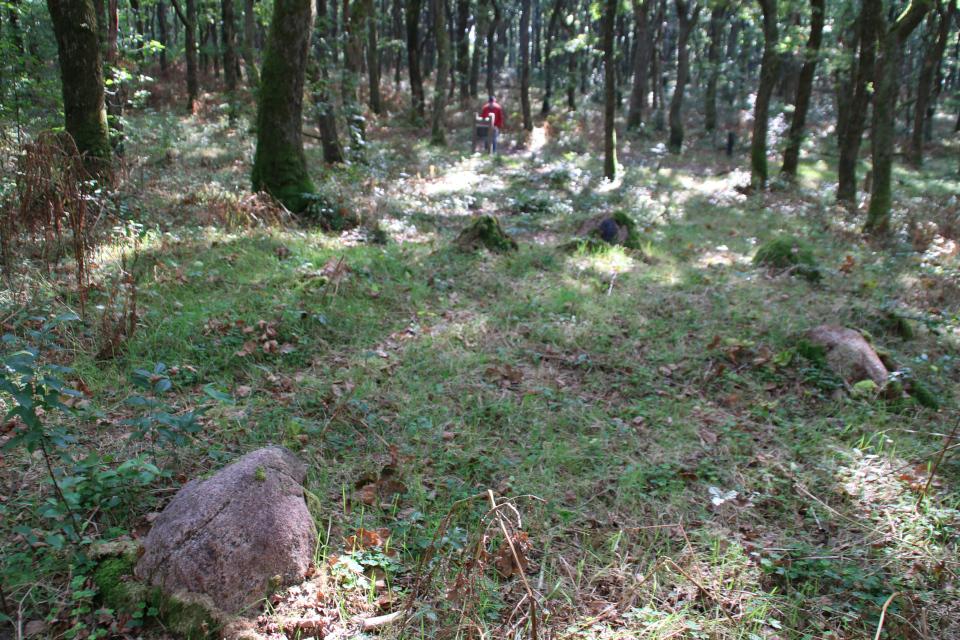 Каменный круг, от которого начинается каменный ряд к кургану.