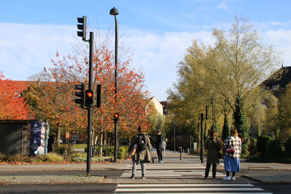Викинги на светофорах в Орхусе -пешеходный переход возле Мёллепаркен