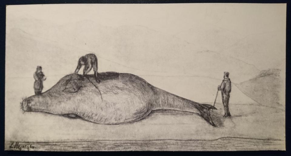 """Стеллерова корова, выставка """"Витус Беринг"""", музей г. Хорсенс, Дания"""