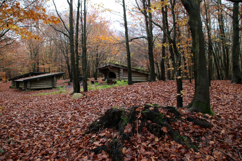 Домики для ночевки - шелтер в лесу охотничьих угодий / Store Dyrehave