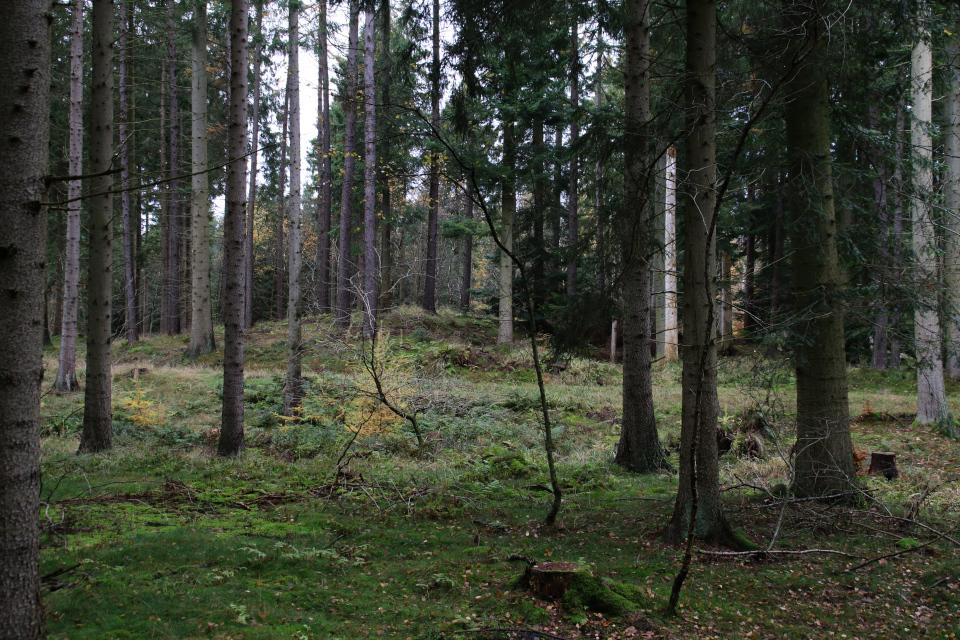 Полуразрушенный курган посреди леса охотничьих угодий / Store Dyrehave