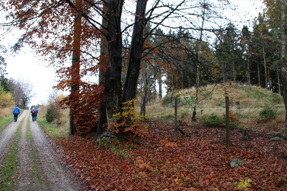 Бывшие бункеры - бомбоубежища вдоль дороги Ottevej