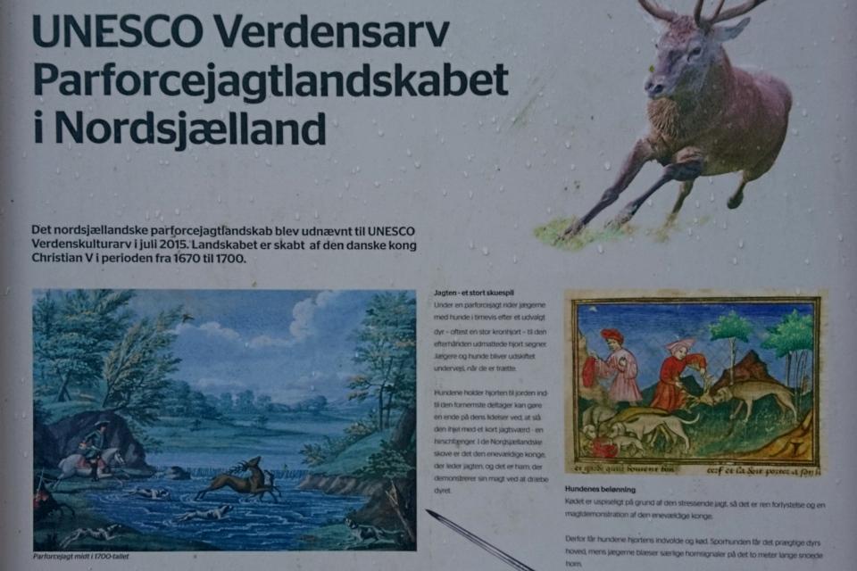 Картины с информационного щита про охоту с собаками на оленя