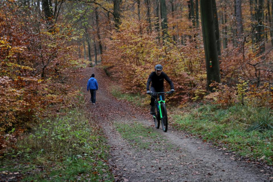 Велосипедист в лесу охотничьих угодий / Store Dyrehave, Дания