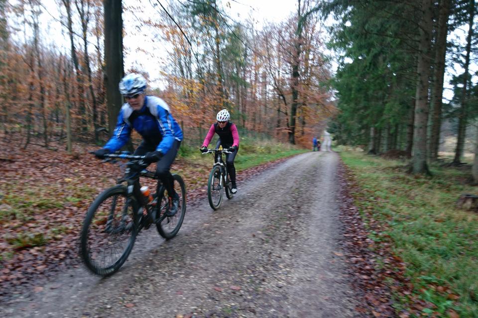Велосипедисты в лесу охотничьих угодий / Store Dyrehave, Дания