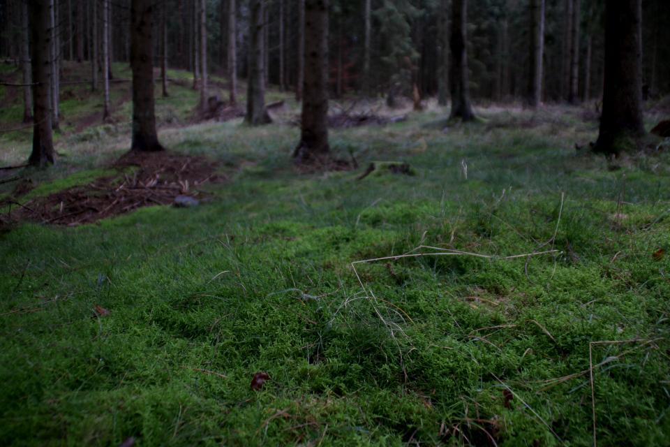 Участок леса, поросший мхом, Охотничьи угодья в Северной Зеландии