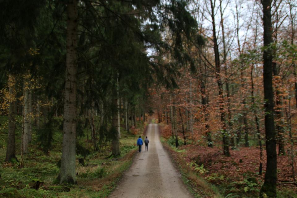 Прямая дорога Ottevej через лес к центральной площади