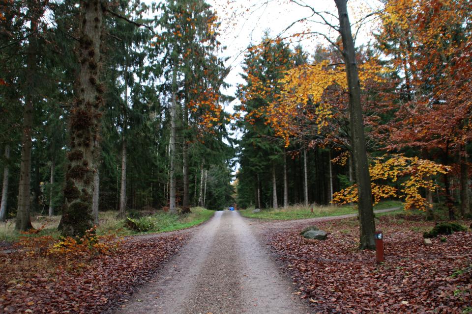 Система дорог, состоящая из звезд - дорога, пересекающая основную