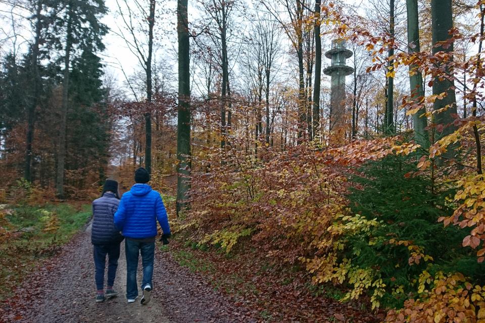 Телевизионная башня в лесу охотничьих угодий / Store Dyrehave, Дания