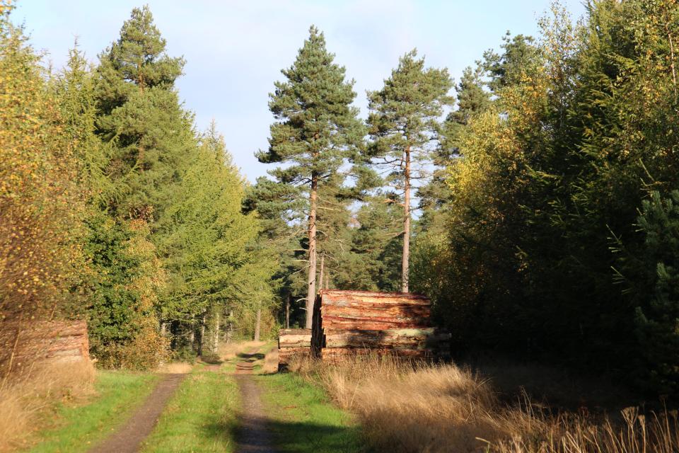 Лесозаготовки недалеко от дорожки, проложенной к каменному кораблю