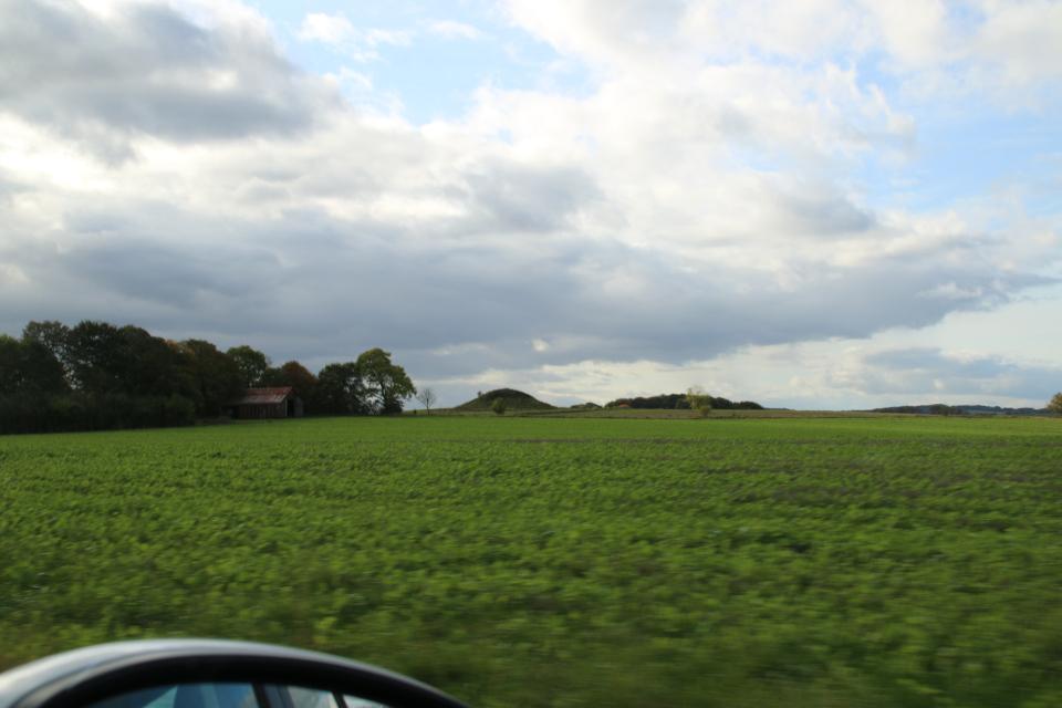 Курган посреди рапсового поля. Вид с дороги по пути к Хой Стене, Дания